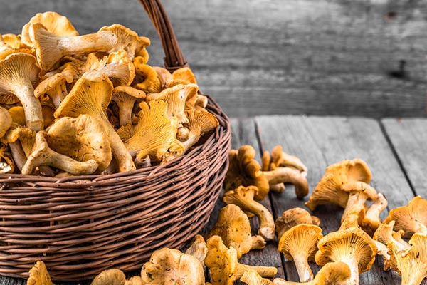 Chanterelle Mushroom Recipes