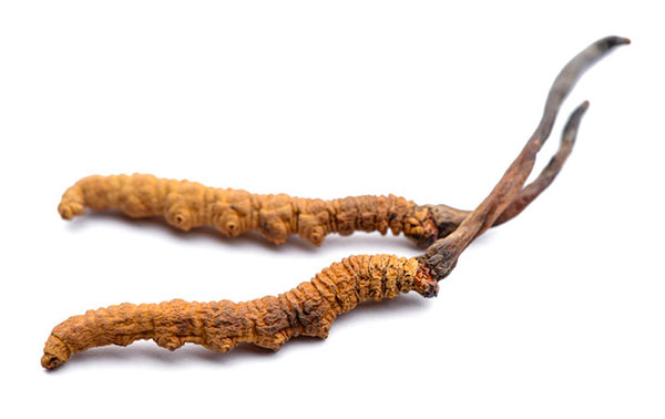 Parasitic Cordyceps Mushrooms -- Parasitic
