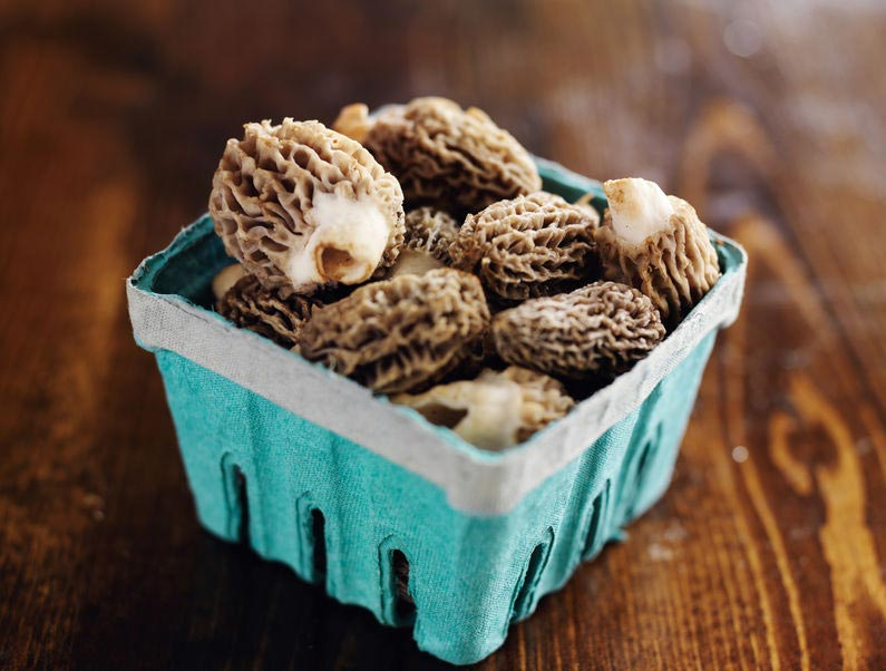 Morels from the Store