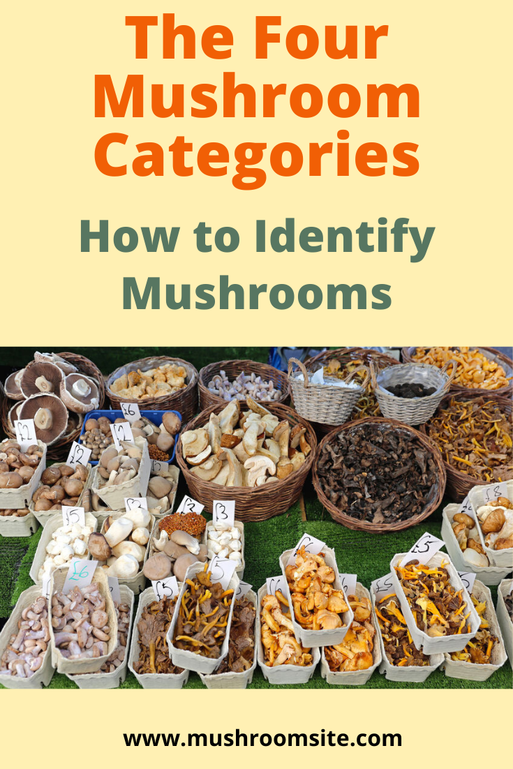 What Are the Four Categories of Mushrooms