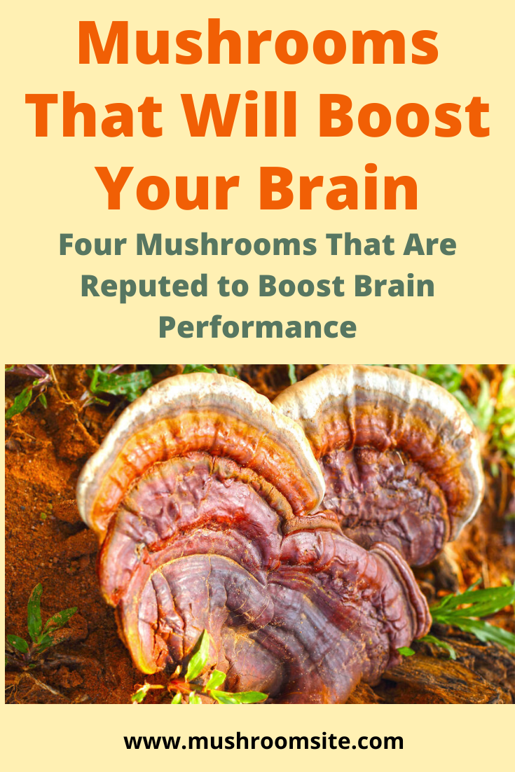 Mushrooms that boost brain performance