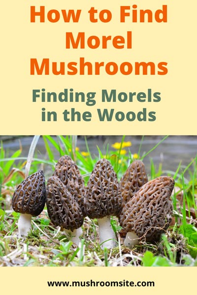 How to Find Morels