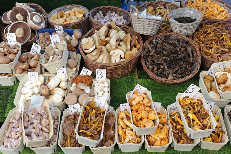 Categories Of Mushrooms