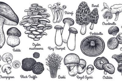 Common Edible Mushrooms -- A Brief Guide