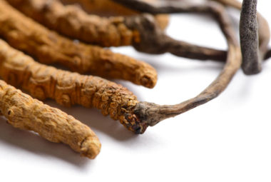 A Guide To Cordyceps Mushrooms