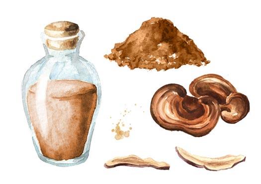 How To Make Mushroom Tea And What To Use