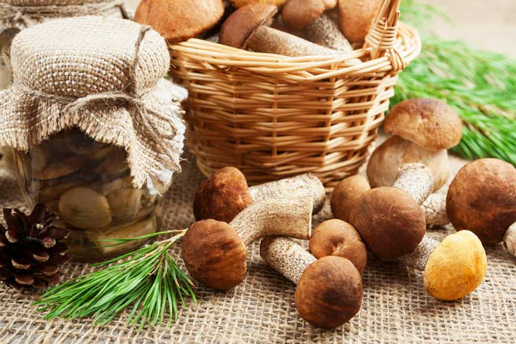 How Long Do Mushrooms Last? The Complete Guide