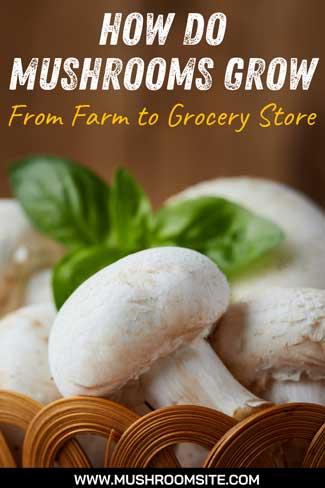 How Do Mushrooms Grow