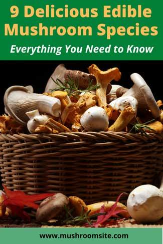 Edible mushroom species