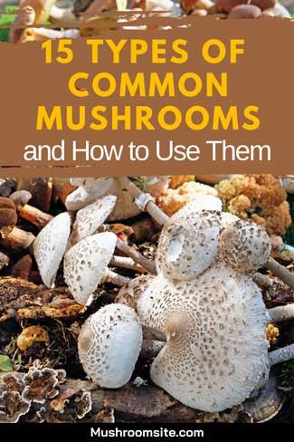 common mushrooms