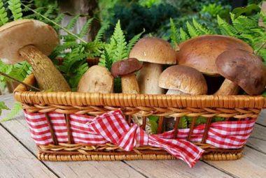 Mushroom Types