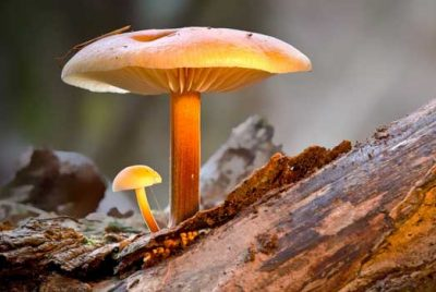 Parts Of Mushroom