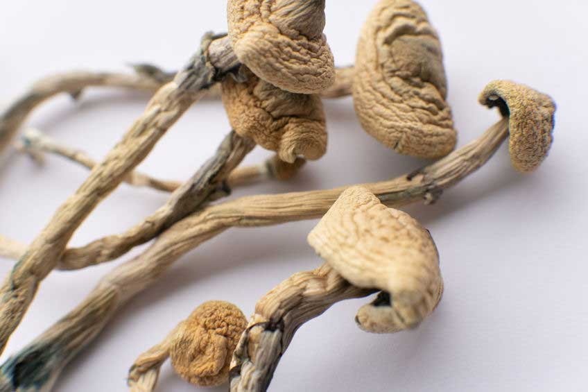 Dried Psilocybin Mushrooms